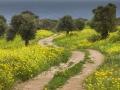 Weg im Frühling