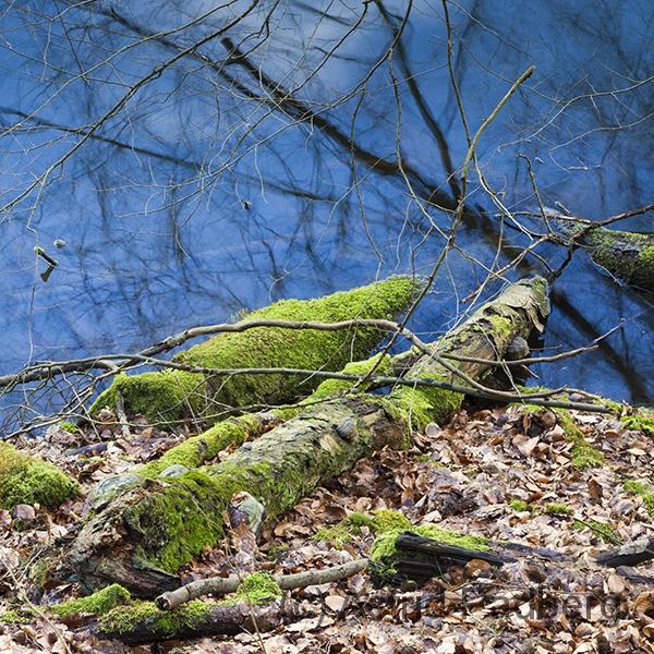 Bäume im Wasser, Weg nach Beyenburg