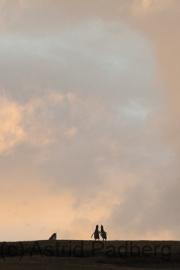 Pinguine bei Sonnenuntergang