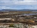 Carcass Island, Seeelefanten