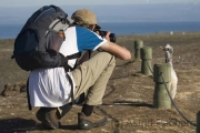 Basstölpel am Cape Kidnappers