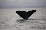 Kaikoura, Whale-Watching