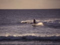 Surfer vor Hanga Roa