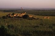 Blick über die Savanne des Masai Mara NP