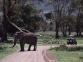 Ngorongoro Krater, Elefanten