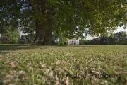 Kastanie und Villa Hügel