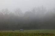 Morgennebel in Sonnborn
