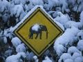 Schild, Elefanten