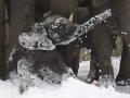 Tika im Schnee
