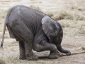 Elefanten, Pina-Nessie