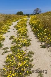 Weg in Salamis