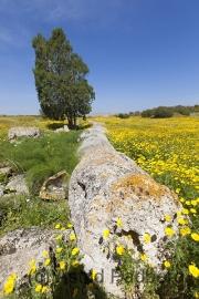 Salamis, Zeustempel