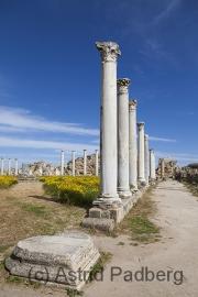 Salamis, Gymnasium