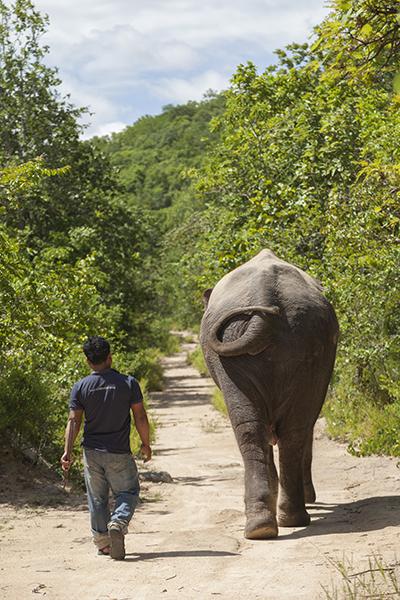 Spaziergang mit Elefant