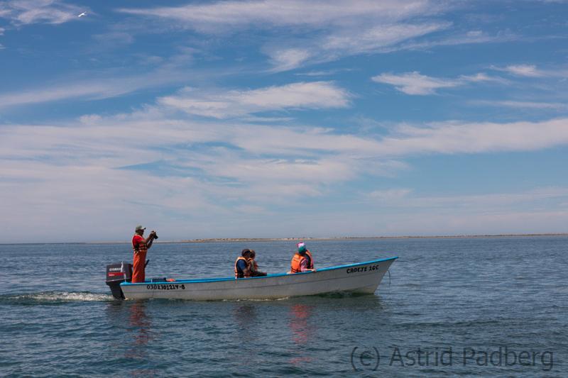 Scammons Lagune, Baja California, Mexiko