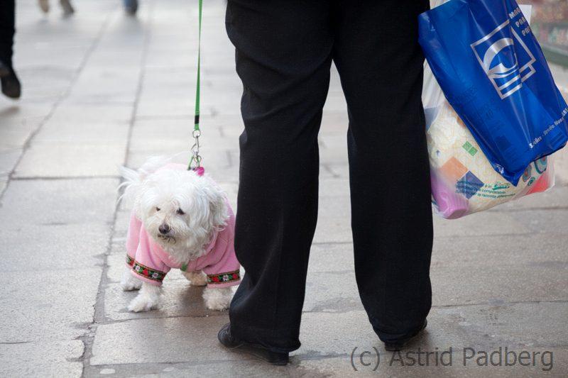 Hundemode in Venedig