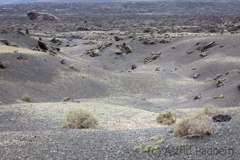 Landschaft im Litoral