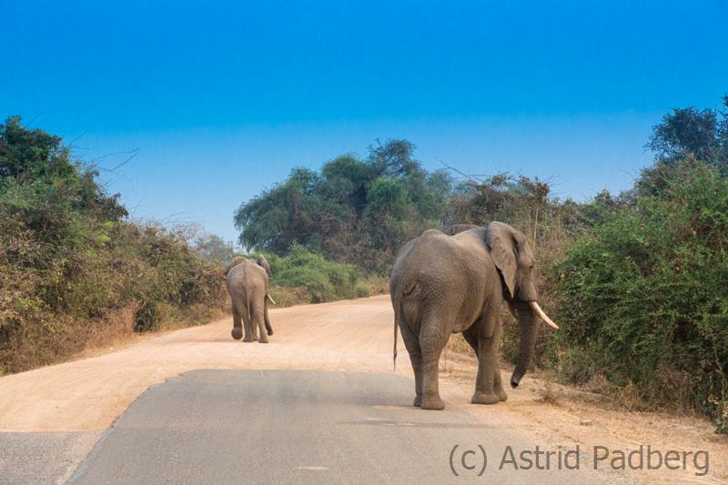 Elefanten am Eingang zum South Luangwa Nationalpark