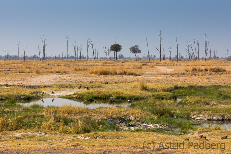 Landschaft, South Luangwa Nationalpark