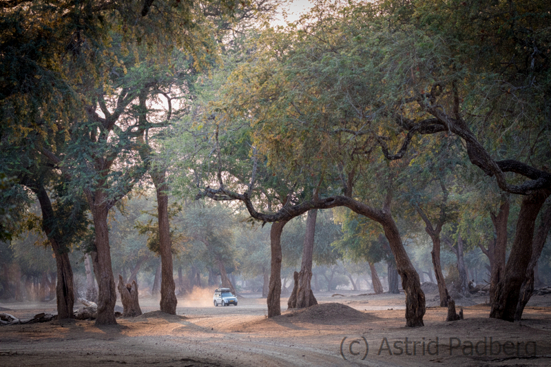 Wald im Mana Pools Nationalpark