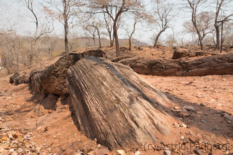 Chirundu Petrified Forest
