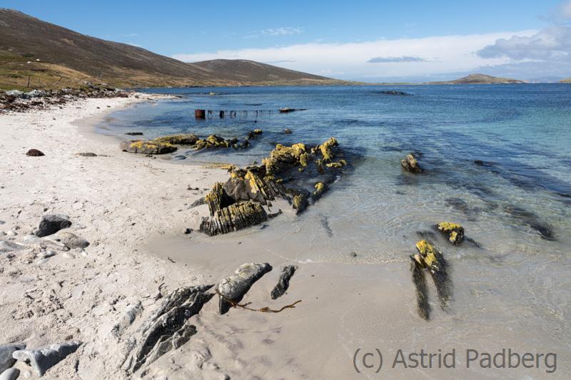 Carcass Island