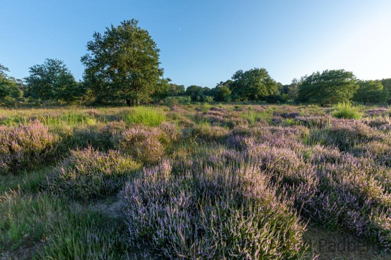 Landschaft Wahner Heide