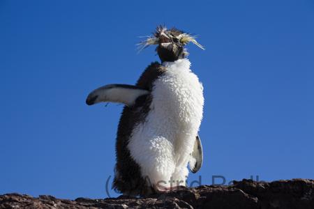 Isla-Pinguino