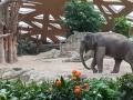 Elefantenhaus