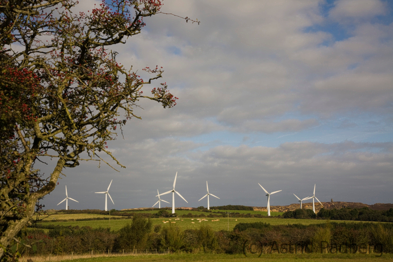Windkraft, zwischen Dulas und Amlwch