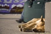 Müder Hund am Busbahnhof