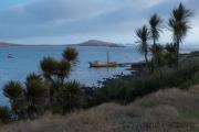 Carcass Island, settlement