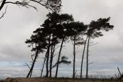 Weststrand, Darß