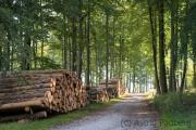 Wanderweg, Teutoburger Wald
