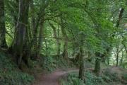 Okehampton nach Lydford, Lydford Gorge