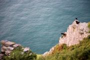 Küste zwischen Lynton und Heddons Mouth,Capra aegagrus hircus, Feral goat