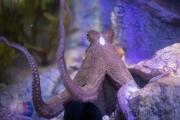 Zoo Duisburg Oktopus