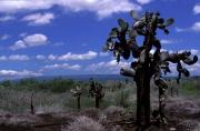 Landschaft, Isabela