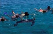 Meeresschildkröte und Schnorchler