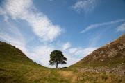 Sycamore Gap , Robin Hood's Tree