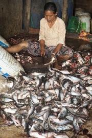 Fischverarbeitung