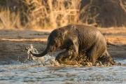 Elefantenkalb beim Bad