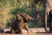Elefantenbaby am Wasserloch