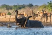 Elefantenbulle am Wasserloch