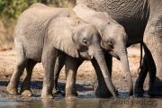Elefantenfamilie am Wasserloch