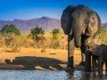 Elefantenmutter mit Kalb