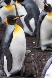 """""""Bald bin ich auch so groß wie Mama!"""""""