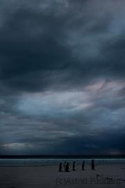 Königspinguine kurz vor Sonnenaufgang
