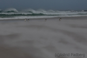 Sandsturm am Volunteer Beach