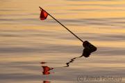 Fischerfähnchen